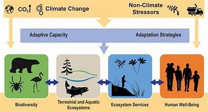 Climate Ecosystem Ecosystems Services Biodiversity Change Diagram
