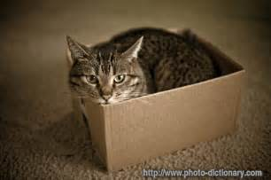 cat in a box cat in a box photo picture definition at photo