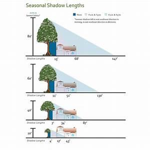 Shade-tree-shadow-lengths