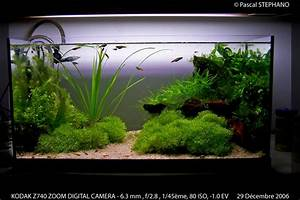 Deco Aquarium Zen : id e aquarium zen ~ Melissatoandfro.com Idées de Décoration