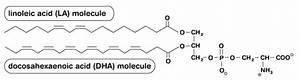 Consumer U2019s Guide To Phosphatidylserine  Why Isn U0026 39 T Diet