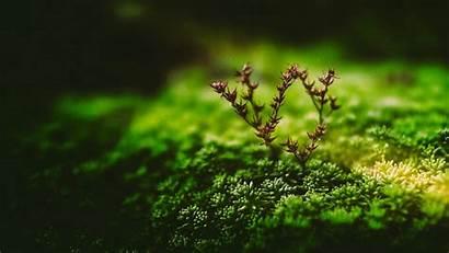 Plant Macro Branch 1080p Tiny 4k Background
