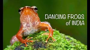 Dancing Frogs Of India