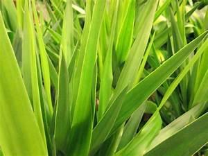 Welche Erde Für Palmen : yucca palme d ngen wann und womit palmlilie ~ Watch28wear.com Haus und Dekorationen