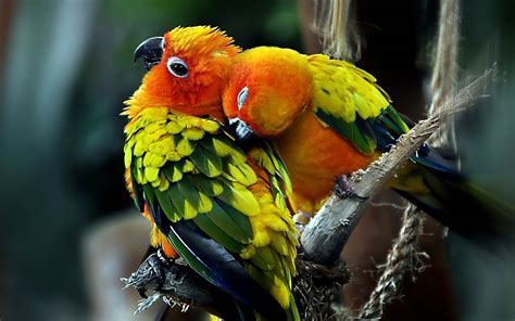 Wallpapers Love Birds Desktop Wallpapers