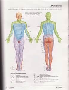 Netter Dermatome Map