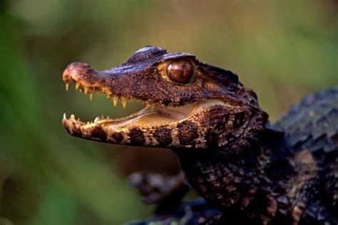6 Basic Animal Classes Animal groups Animals Reptiles pet