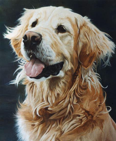 Golden Retriever Dog Portrait 1 Oils On Canvas