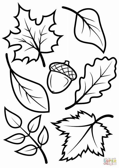 Coloring Leaves Fall Pages Acorn Printable Drawing