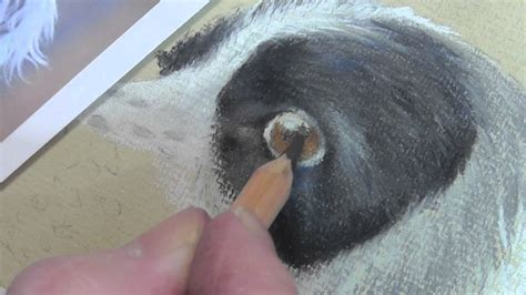 draw  dogs eye  pastel pencils youtube