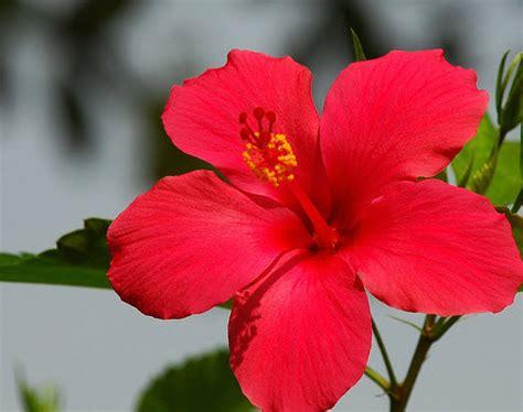 bunga terakhir seperempat abad geotimes