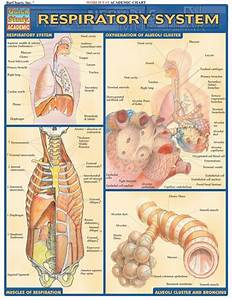 137 Best Human Anatomy And Physiology Images On Pinterest