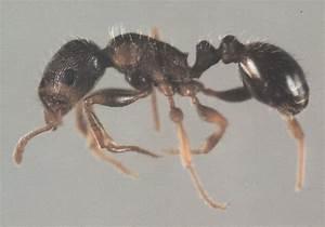 Ants - Pest Control Services Burlington & Oakville - Pest ...