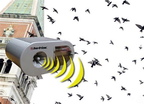 how to keep birds away homesfeed