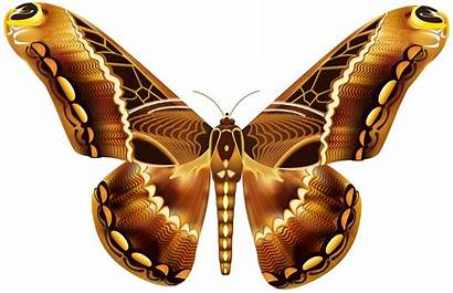 Butterfly Clipart Brown Butterflies Transparent Clipground Cliparts