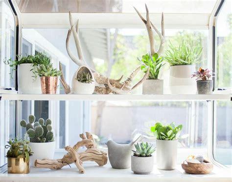 Best Indoor Window Sill Plants by 25 Best Ideas About Kitchen Garden Window On
