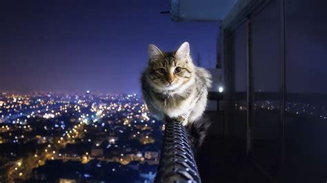 Guy Jumps Off Balcony by 画像 ネコ壁紙 癒されるにゃんこの壁紙まとめ Naver まとめ
