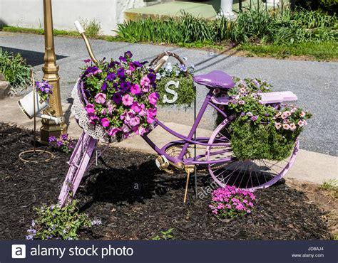 vasi di lavanda in stile vintage bicicletta giardino dipinto di lavanda e