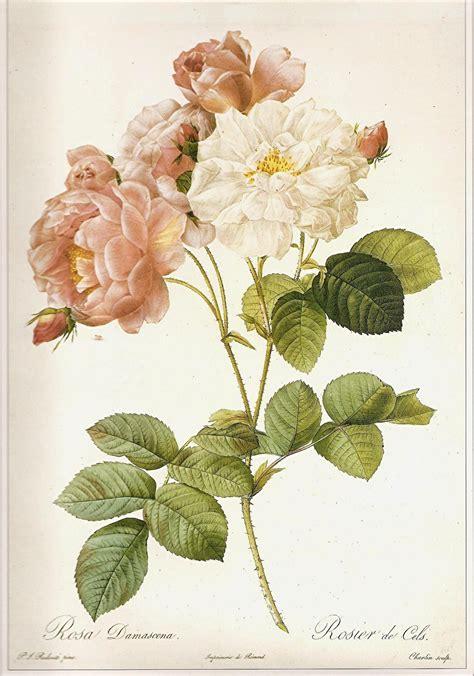 how to make botanical prints vintage botanical prints rose