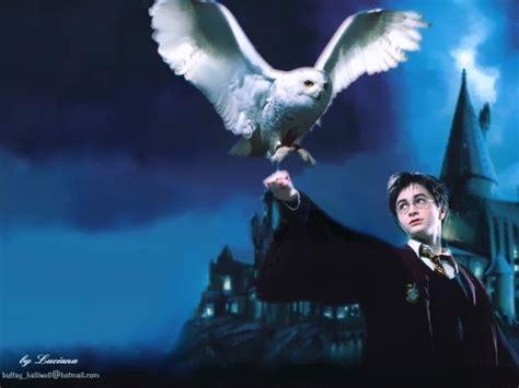 Harry Potter Wallpaper Hedwig Owl of hedwig harry potter wallpaper