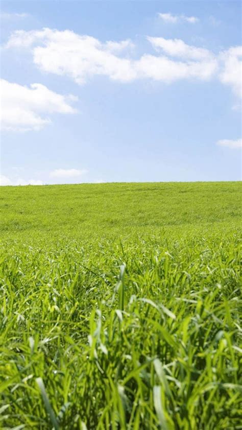 小清新绿色护眼草原风景_风光手机壁纸-壁纸族