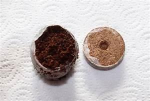 Kokos Blumenerde Für Welche Pflanzen : bestimmte sorten und jungpflanzen erfodern eine anzucht im januar ~ Orissabook.com Haus und Dekorationen