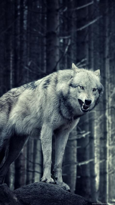 And Wolf Wallpaper Hd by Hd Wolf Wallpapers Top Free Hd Wolf Backgrounds