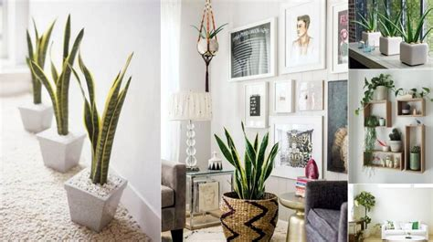 how to do interior decoration at home 6 creative ways to include indoor plants into your home décor