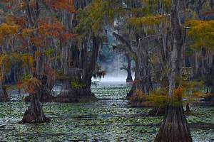 Caddo Lake Morning Photograph by Snow White