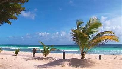 Coconut Beach Beaches Barbados Caribbean Trees Breeze