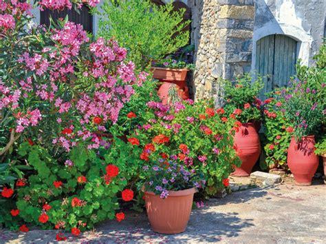 Kübelpflanzen Jetzt Für Den Sommer Fit Machen