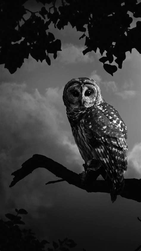 Black White Animal Wallpaper - barn owl wallpaper 63 images
