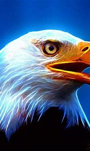 68+ Eagle Wallpapers on WallpaperPlay | Animal spirit ...