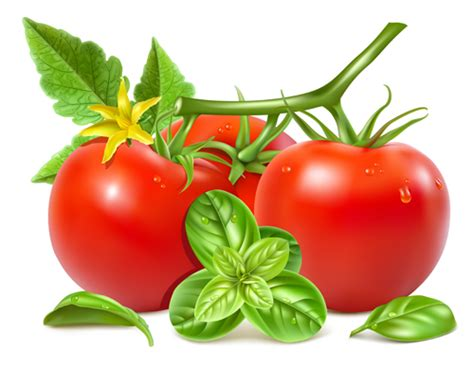 tomato  green leaves vector vector food