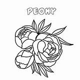 Coloring Peony Flower Pages Flowers Printable sketch template