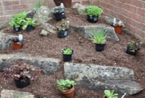create  alpine rockery amateur gardening