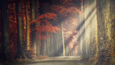 wallpaper forest path autumn sun light hd  nature