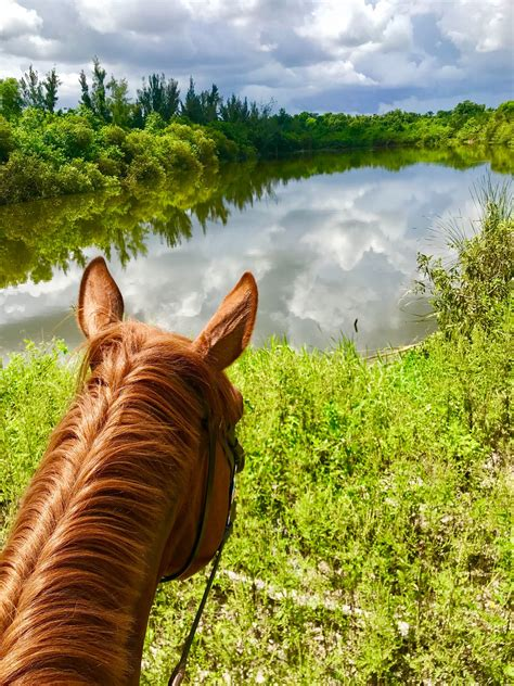 Florida for the Equestrian: Why Horse Lovers Should Trot ...