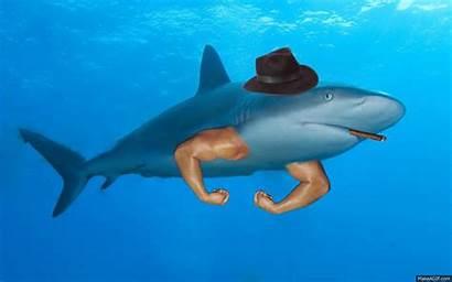 Shark Gifs Sharks Gangster Deal Prev Abyss