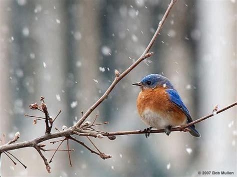 tips on feeding birds in winter winter holiday s