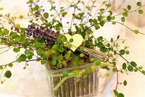 Blume Und Leben : innen und aussenbepflanzung blume leben ~ Articles-book.com Haus und Dekorationen