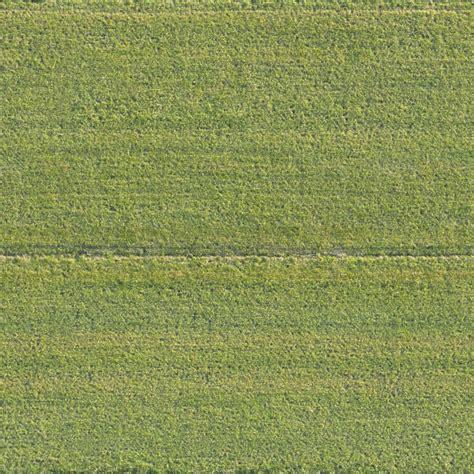 grass  background texture aerial field grass