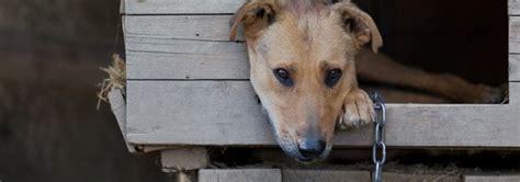 report animal cruelty   bc spca