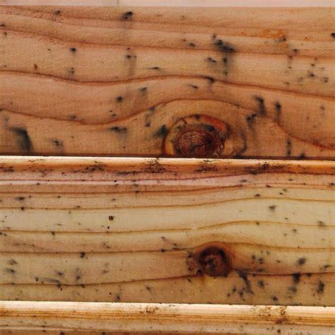 schimmel auf unbehandeltem holz entfernen wie bekomme ich schimmelsporen aus lerchenholz schimmel behandlung leiche