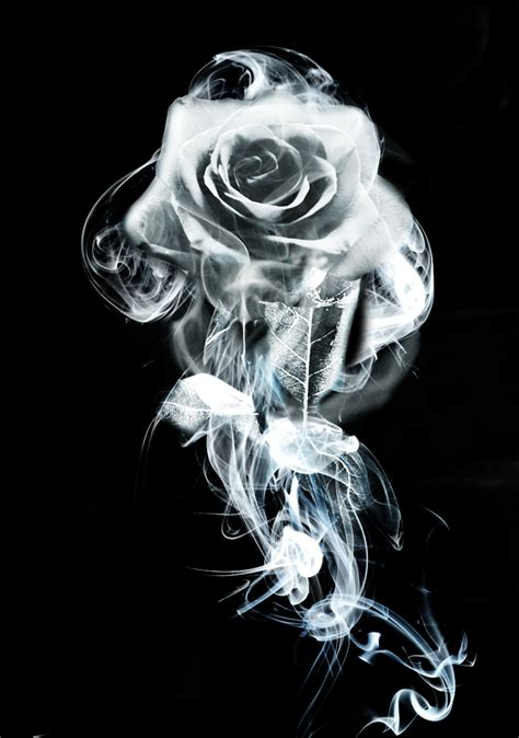 smoke rose by wizardofwizardry on deviantart