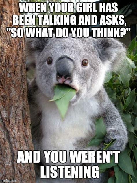 Meme Generator Koala - surprised koala meme imgflip