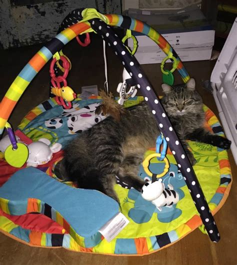cat play mat cat thinks it s a baby and we can t blame it