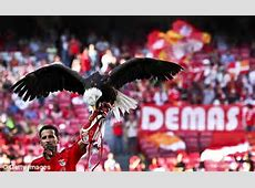 Benfica's history Eusebio, eagles and 22,000 trophies