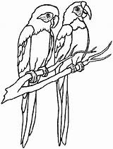 Coloring Pages Parrot Macaw Couple Flying Printable Parrots Drawing Macaws Clipartpanda Getdrawings Clipart Scarlet Getcolorings sketch template