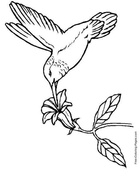 bird coloring pages bestofcoloringcom
